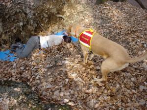 Rettungshunde 2009 031